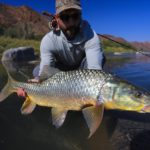 flies for the Orange River
