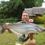 sawai catfish