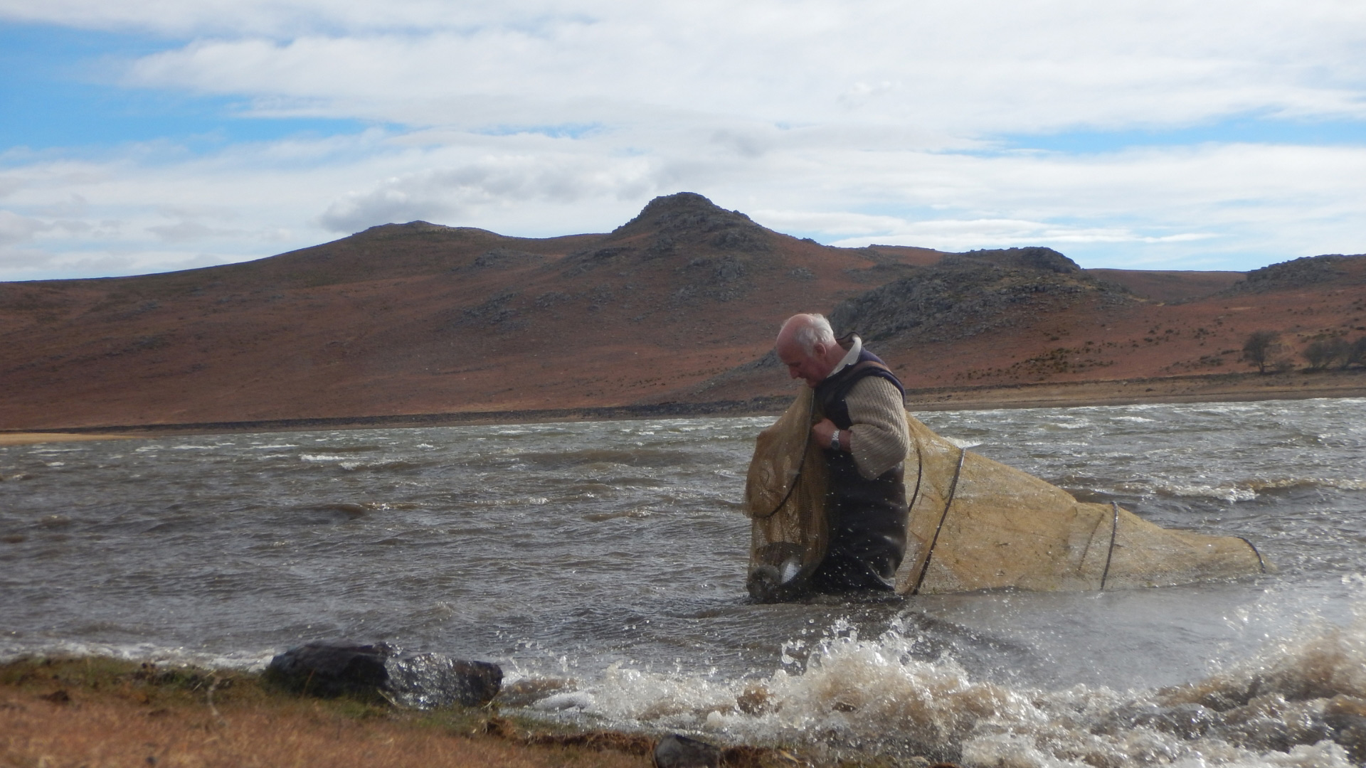 Martin Davies netting rainbow trout at Thrift Dam
