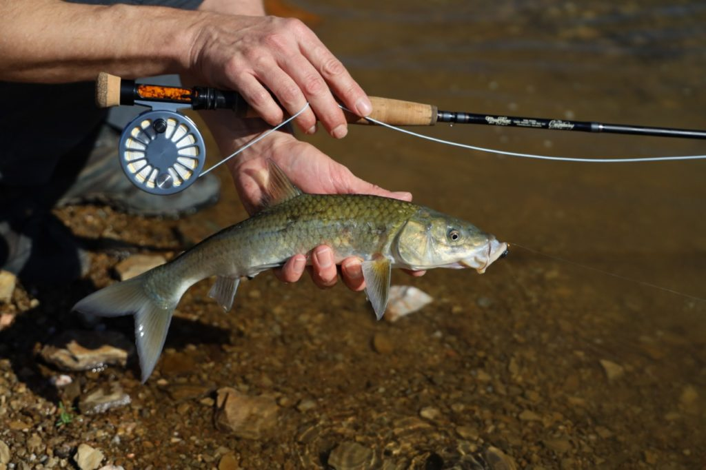 The Rio Technical Trout line in action on some witvis
